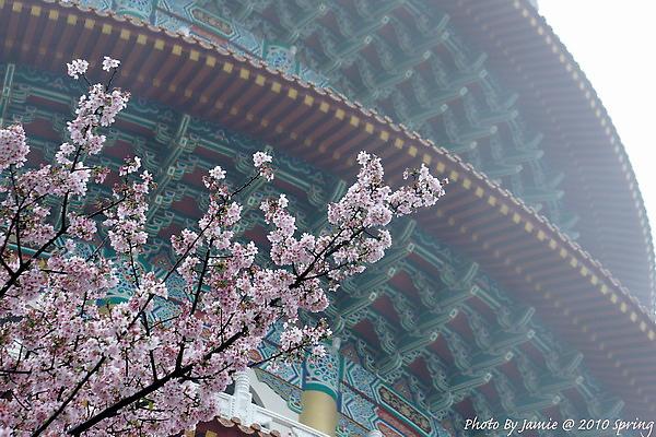 Tian_yang_sakura0055.jpg