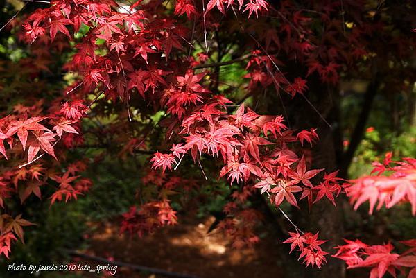 Late_spring_0003.JPG