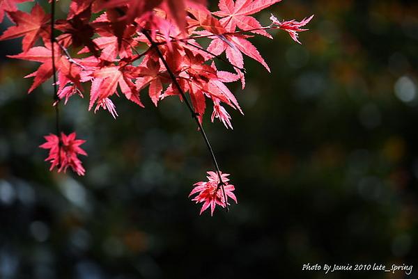 Late_spring_0007.JPG