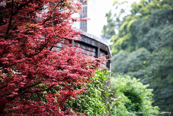 Late_spring_0010.JPG
