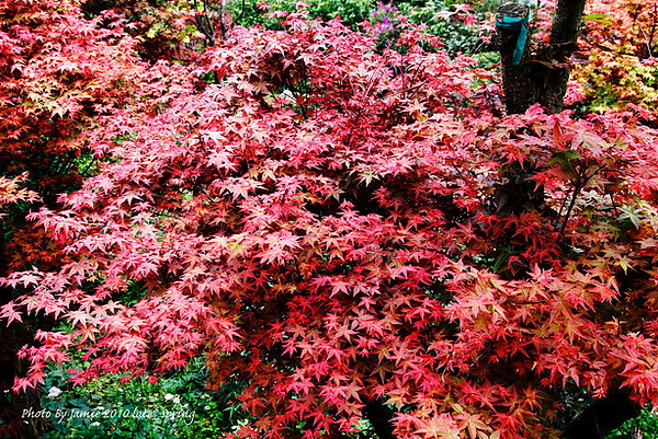 Late_spring_0013.JPG