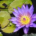 10_lotus_0003.JPG