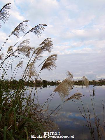 羅東林業文化園區 畜木池