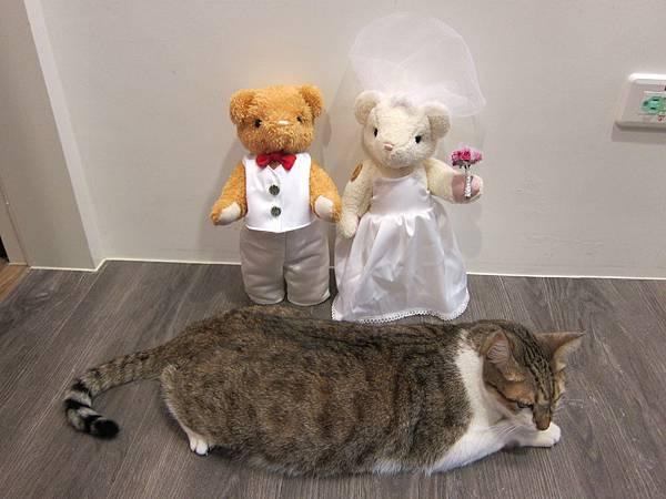 班少爺&婚禮熊