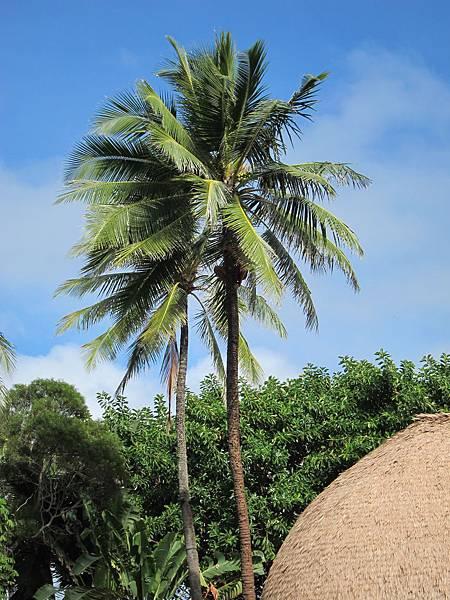 薩摩亞 Samoa (4)