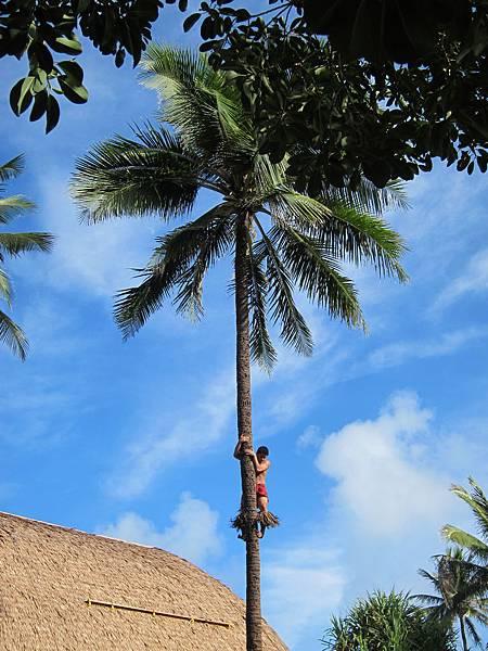 薩摩亞 Samoa (5)
