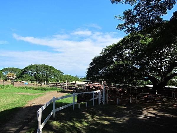 131212-1 Kualoa Ranch (106)