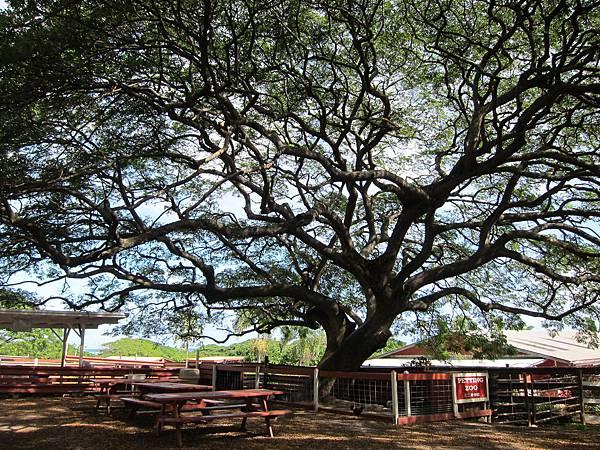 131212-1 Kualoa Ranch (128)