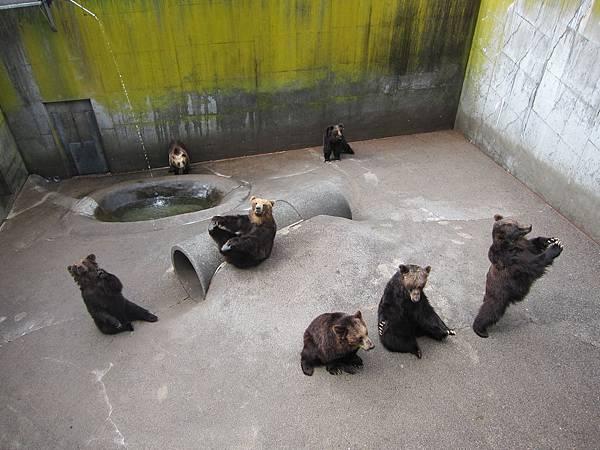 140528-2 熊牧場 (15)