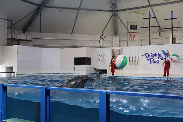 140528-3 尼克斯海洋公園 (61)
