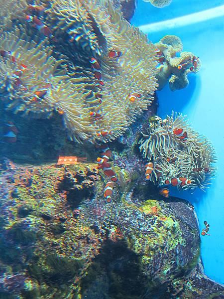 140528-3 尼克斯海洋公園 (89)