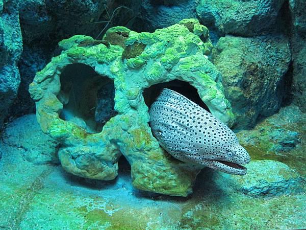 140528-3 尼克斯海洋公園 (90)