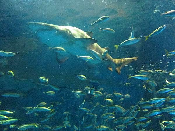 140528-3 尼克斯海洋公園 (95)