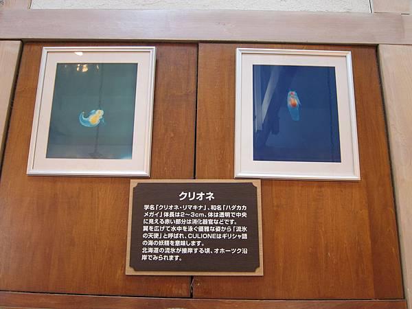 140529-2 小樽街道 (6)