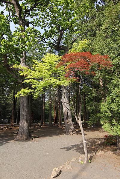 140529-5 北海道神宮 (17)