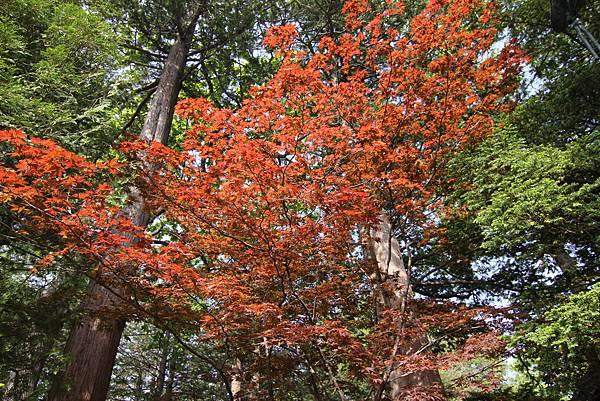 140529-5 北海道神宮 (18)