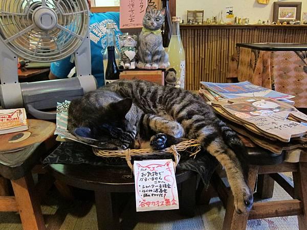 ねんねこ家(貓屋) (11)