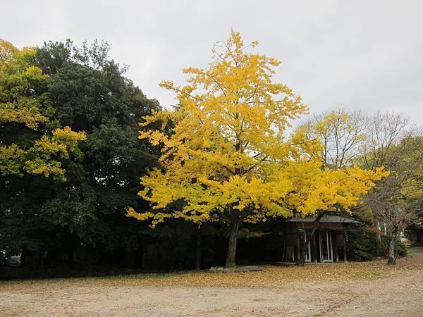 161117-5 八坂神社 (24)