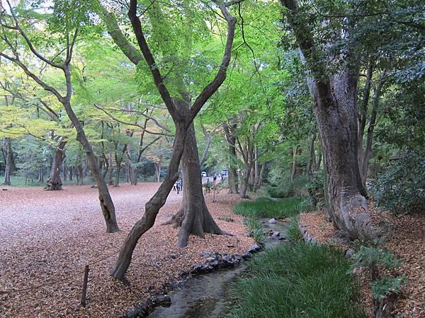 161117-6 下鴨神社 (13)