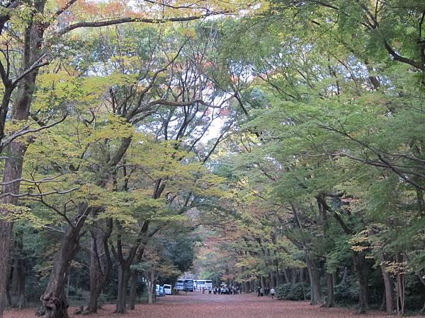 161117-6 下鴨神社 (14)