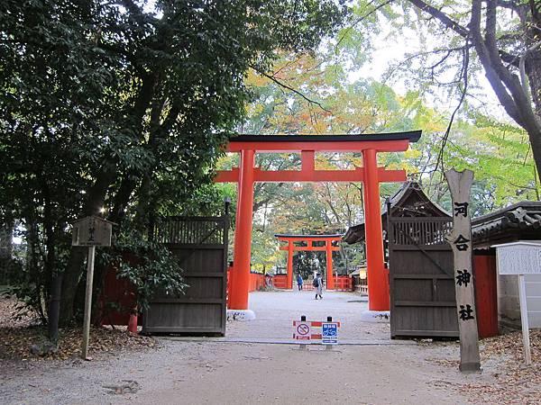 161117-6 下鴨神社 (15)