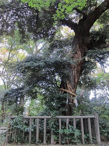 161117-6 下鴨神社 (18)