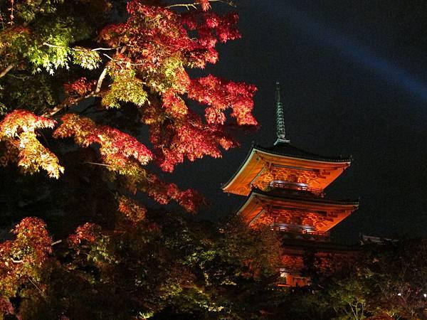 161114-3 清水寺夜間參拜 (48)
