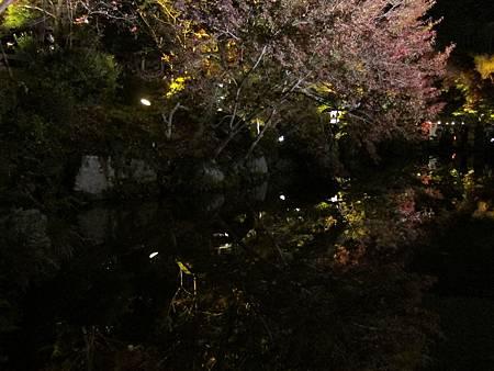 161114-3 清水寺夜間參拜 (52)