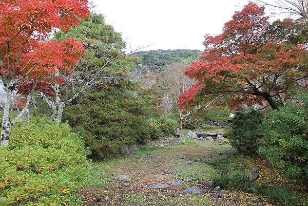 161115-6 円山公園 (6)