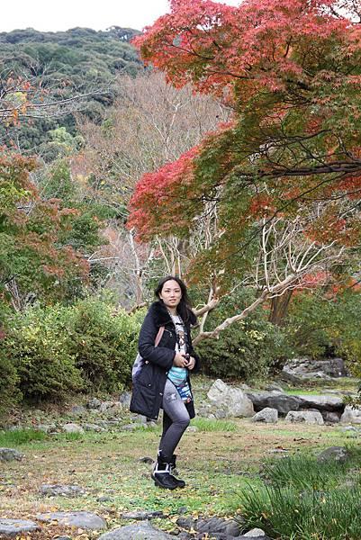 161115-6 円山公園 (8)