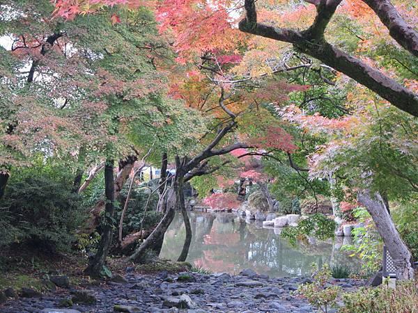 161115-6 円山公園 (11)