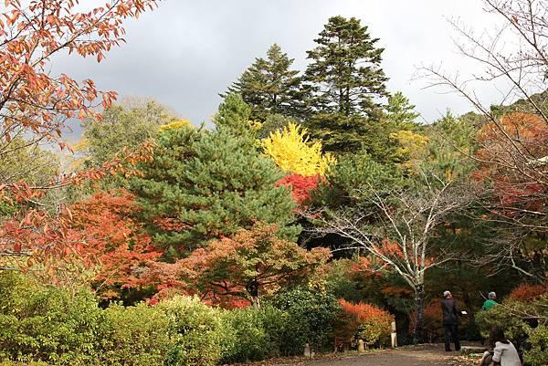 161115-6 円山公園 (13)