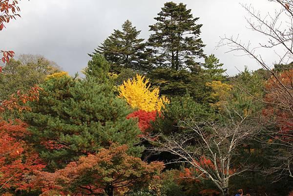 161115-6 円山公園 (14)