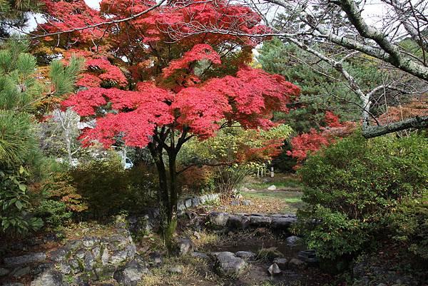 161115-6 円山公園 (17)