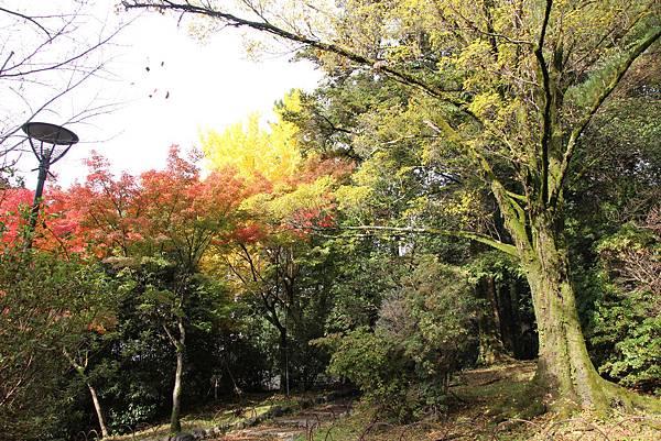 161115-6 円山公園 (20)