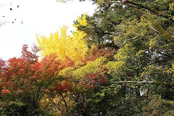 161115-6 円山公園 (21)
