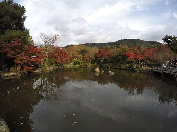 161115-6 円山公園 (27)