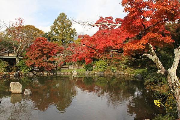 161115-6 円山公園 (29)