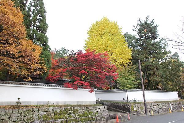 161115-6 円山公園 (35)