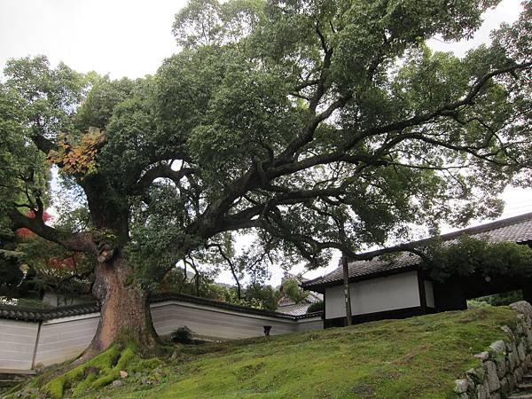 161115-7 青蓮院門跡 (1)