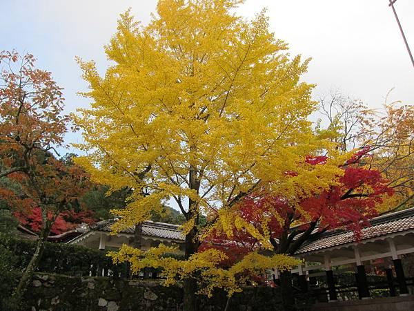 161115-9 南禪寺 (14)