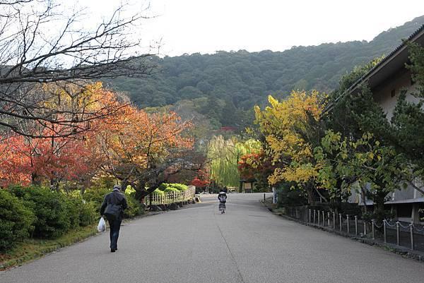 161116-1 円山公園 (1)