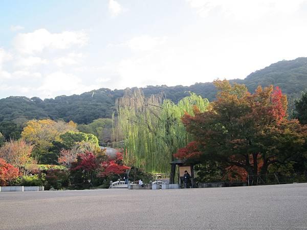 161116-1 円山公園 (2)