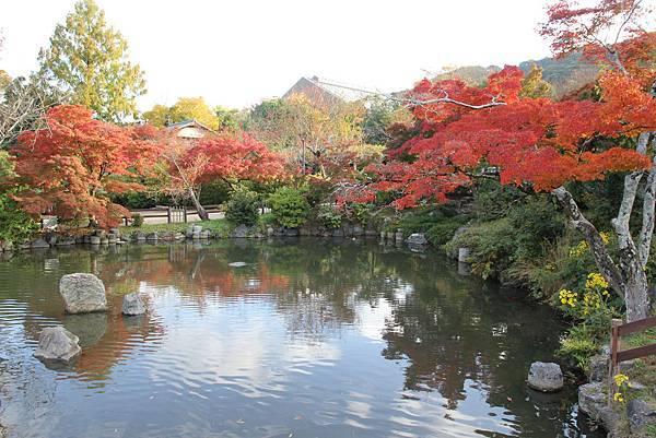 161116-1 円山公園 (4)