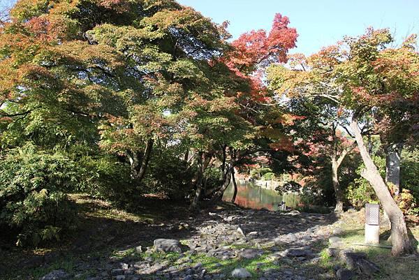 161116-1 円山公園 (8)