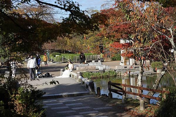 161116-1 円山公園 (9)