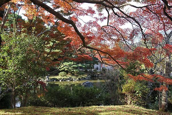 161116-1 円山公園 (10)