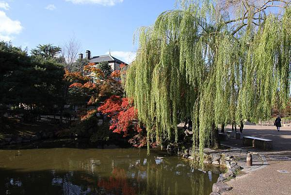 161116-1 円山公園 (13)