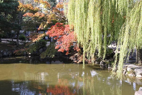 161116-1 円山公園 (14)