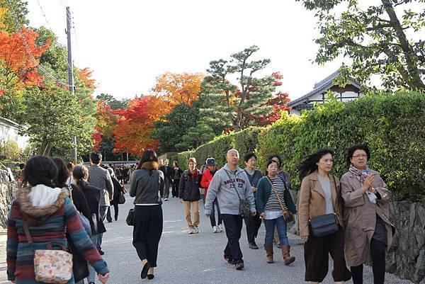 161116-5 東福寺 (1)